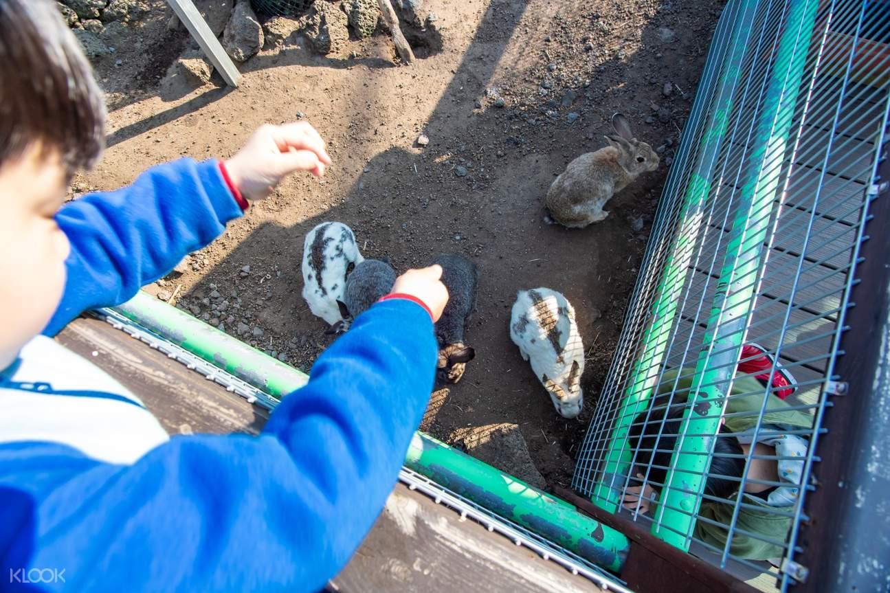 Feed rabbits